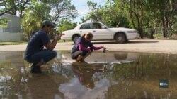 Волонтери в Маямі допомагають науковцям вивчати кліматичні зміни. Відео