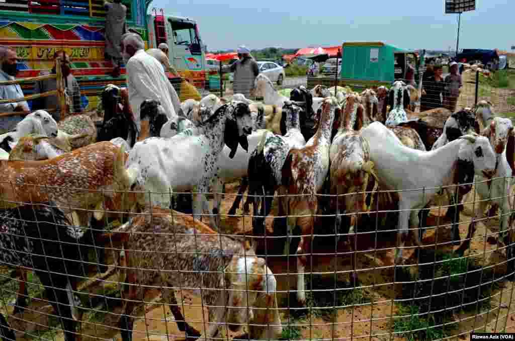 گزشتہ برسوں کی نسبت اس بار منڈی میں جانور تو زیادہ ہیں لیکن انھیں خریدنے والوں کا شکوہ ہے کہ قیمتیں ان کی پہنچ سے باہر ہیں۔