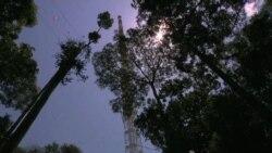 Gigantesca torre en medio del Amazonas