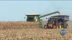 Американські фермери у скруті. Відео