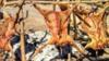 ZABEN 2015:Wasu sun Yanka Shanu da Awaki a Bauchi da Taraba