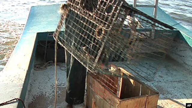 Fishermen open crab traps off coast of Louisiana threatened by the huge oil slick