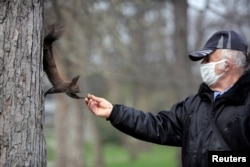 A park security guard Sofia, Bulgaria wears a protective face mask as he feeds a squirrel in a tree. March 22, 2020. City parks there restricted access in an attempt to prevent the spread of coronavirus disease COVID-19. (Reuters photo)