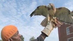Птица как символ надежды