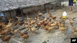 Avian influenza has killed 27 people in 30 Cambodian cases of the disease since a worldwide outbreak in 2003.
