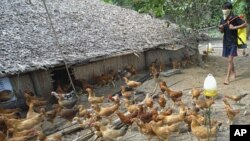 Worldwide, bird flu has been confirmed in 563 people since 2003, with 330 of them dying.
