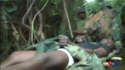 L'armée congolaise traque les ADF (vidéo)