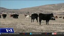 Komunitetet rurale amerikane dhe politika lokale