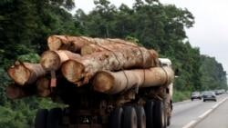 La Cemac reporte l'interdiction d'exportation du bois en grumes
