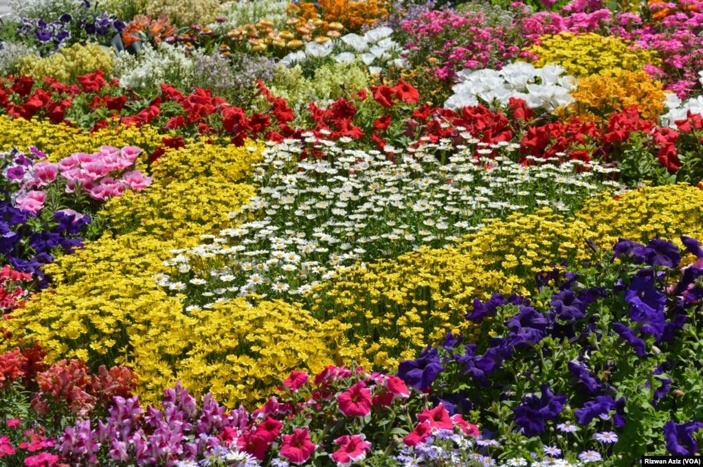 صحت افزا ماحول میں پھولوں کلیدی اہمیت کے حامل ہیں