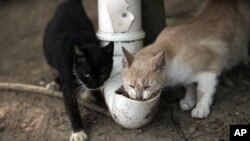 "Cats eat from a food dispenser filled up by volunteers from Animal Heart Protectors on Furtada Island, popularly known as ""Island of the Cats,"" in Mangaratiba, Brazil, Tuesday, Oct. 13, 2020. (AP Photo/Silvia Izquierdo)"