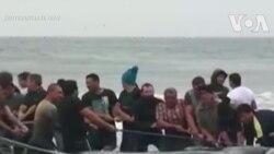 Giải cứu cá voi mắc cạn thất bại