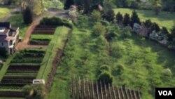 Pogled na voćnjak i terasaste povrtnjake u Monticellu. (Monticello/Leonard G. Phillips)