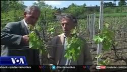 Bujqësia sfidë e ekonomisë shqiptare