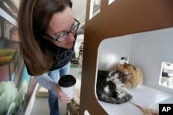 Cô Dawn Piper tiến sát tới những chú mèo ở quán Cat Town Cafe, Oakland.