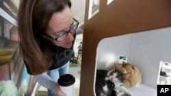 Kucing di Cat Town Cafe di Oakland, California. Para pelanggan kedai kopi bisa menikmati kopi sambil bermain dengan kucing. (AP Photo/Eric Risberg)