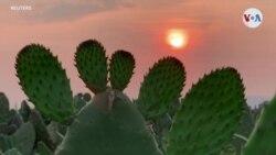 El cactus, el aliado de la purificación