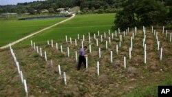 """6月28日,一位韩国坡州的当地居民在检查""""敌军墓地""""的木制墓牌"""