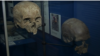 Human skulls discovered during the construction of London's Crossrail project.