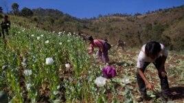 Opiumi në vendet e Azisë Juglindore