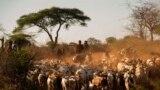 VOA60AFIRKA: Takaitattun labaran Afirka na kasashen Zimbabwe, Najeriya, Ivory Coast, Afirka ta Kudu da Jamhuriyar Demokradiyya Congo