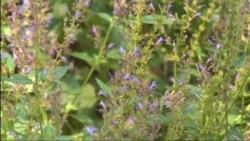 Пчелы Вашингтона