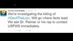Američke vlasti najavile istragu ubojstva lava Cecila