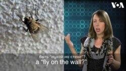 «Английский за минуту»: fly on the wall