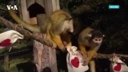 Животные тоже умеют смеяться