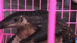 国际社会协同作战保护野生动物