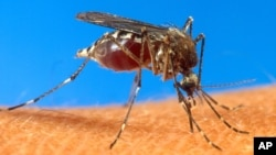 Mosquitoes can carry deadly diseases such as malaria.