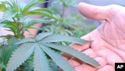 Dans l'Etat de Washington, les particuliers peuvent désormais fumer du cannabis dans leur intimité