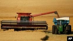 FILE - Winter wheat is harvested in a field near McCracken, Kansas, June 15, 2018.
