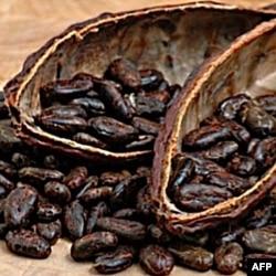 Kompanija uvozi vrhunska zrna kakaa