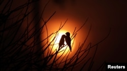 Birds are pictured as the sun rises amid smoke from a burning tract of Amazon jungle as it is cleared by loggers and farmers near Porto Velho, Brazil August 28, 2019.