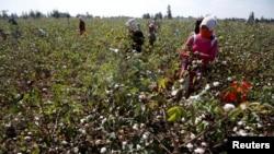 Récolte de coton dans un champ du village de San El Hagar, dans la province d'Al-Sharkia, au nord-est du Caire, en Égypte, le 18 octobre 2016.