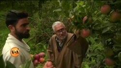 جموں و کشمیر میں سیب کے کاشت کار پریشان