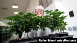 A worker smiles as she shows cannabis plants at the Tilray factory in Cantanhede, Portugal April 24, 2019.