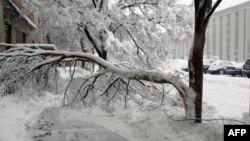 华盛顿大雪压断许多树枝