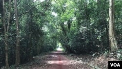 A path of red clay runs through a forest outside Ho Chi Minh City, Vietnam. (VOA News)