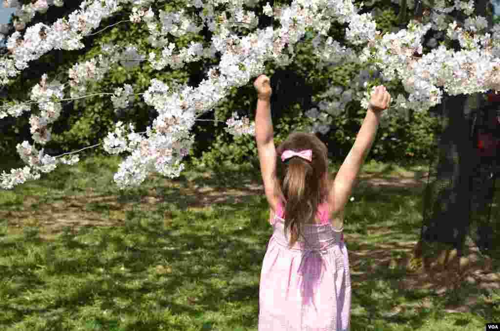 چیری کے پھولوں سے کھیلتی ایک ننھی بچی