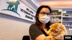 香港 獸醫陳綽姿表示,由寵物狗隻傳染新冠病毒給人類的機會極低,呼籲狗隻主人毋須恐慌。(美國之音湯惠芸)