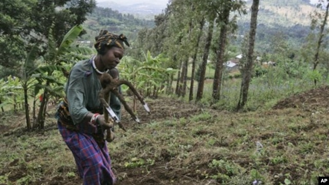 A woman works on a farm in this file photo from near the Tanzanian town of Arusha. Fewer than 10 percent of Tanzanians hold an official title to their land.