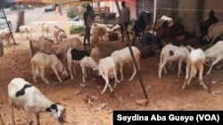 À Dakar, certains vendeurs de moutons s'installent sans précautions sanitaires, le 24 juillet 2020. (VOA/Seydina Aba Gueye)
