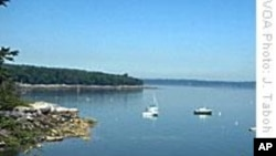 Fish Populations Making Comeback in Maine's Frenchman Bay