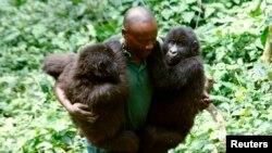 "Mobateli parc a,e,i nitike ya mikomboso mibale ""Ndeze"" na ""Ndakasi"" na Rumungabo, na parc national ya Virunga, na nord ya Goma, Nord-Kivu, 17 aout 2010."