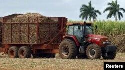 La isla llegó a ser décadas atrás el mayor exportador de azúcar del mundo.