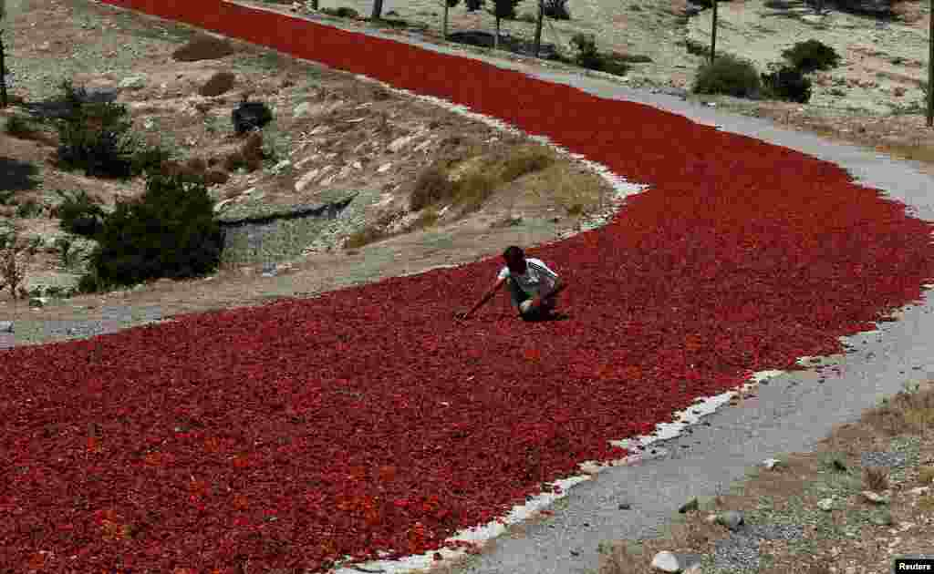A farmer checks hot peppers laid out on a road to dry under the sun before selling them to factories in Kilis province, Turkey.