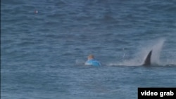 Seorang perempuan tewas diserang hiu di Selandia Baru, Kamis sore, 7 Januari 2021. (Foto: ilustrasi).
