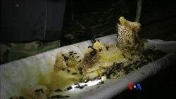 ဒီသီတင္းပတ္ အာရွစီးပြားေရး
